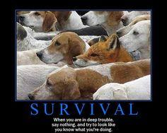 fox+hiding+among+hounds   Fox Hiding Among Blood Hounds