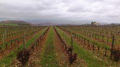 Vineyard, La Rioja Spain