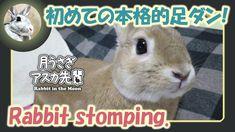 初めての本格的足ダン!【ウサギのだいだい 】 2016年10月27日