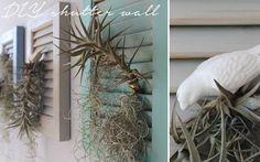 Mooi ligblou en droë plante