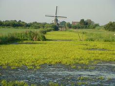 Omgeving Reeuwijkse Plassen