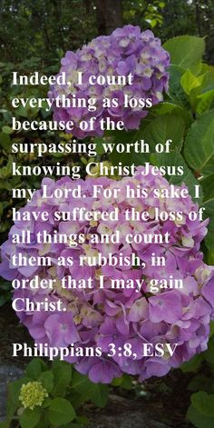 Indeed, I count everything as loss because of the surpassing worth of knowing Christ Jesus my Lord. For his sake I have suffered the loss of all things and count them as rubbish, in order that I may gain Christ. Philippians 3:8, ESV Precious Jesus, Come Unto Me, Christian Friends, Peace Of God, Guard Your Heart, Circumcision, Christian Devotions, Son Of God