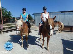 Actief bezig zijn paardrijden Horses, Animals, Animales, Animaux, Animal, Animais, Horse