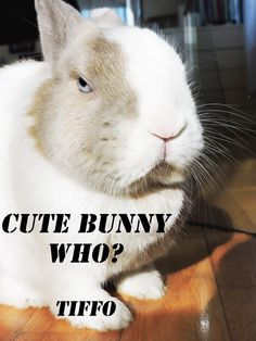 Cute bunny who? Tiffo www.tifforabbit.com My bunny Dingo makes that same exact face when you call him cute.