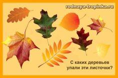 Найди на картинке дубовые листья_1