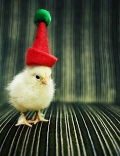 Yes, this chick is wearing a hat. Quickest way to end a debate EVER. (via Pearls and Swine)
