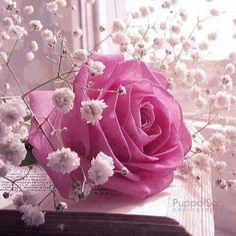 Beautiful pink rose with baby's breathe All Flowers, Pretty Flowers, Colorful Flowers, Pretty In Pink, Unusual Flowers, Shabby Flowers, Flowers Garden, Good Morning Sunshine, Good Morning Friends