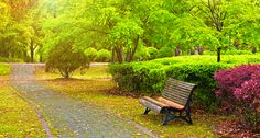 Trees can make summer ozone levels much worse. The greenery releases chemicals, especially on hot days, which work with fossil-fuel pollution to make ozone. Mental Health Benefits, Health And Wellbeing, Ap Environmental Science, Organic Gardening Magazine, Community Space, Tower Garden, Health Heal, Plantar, The Neighbourhood