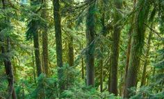 Camping and hiking trip info for the Umpqua National Forest, Oregon. What to do and what to see. From waterfalls, trails, campsite info and pictures.