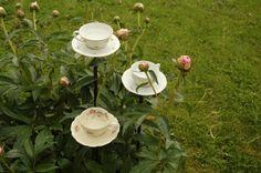 Växthusliv: Kaffebad till fåglarna