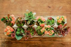 Bright and cheerful succulents in eggshells. Be sure to use the eggs, and check it's culturally OK to reuse shells in this way in your Playcentre :-)