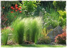 Flowers Nature, Flower Power, Plants, Beautiful, Gardening, Landscape Fabric, Landscape Planner, Balcony, Lawn And Garden
