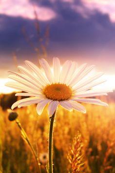 Primavera não é uma simples estação de flores, é muito mais, é um colorido da alma.  Jaak Bosmans
