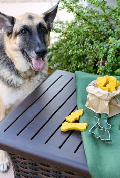 Dogs love pumpkin too, and it's okay for them to eat. These pumpkin-peanut butter dog biscuits are tasty treats your pup will beg for! Dog Biscuit Recipes, Dog Treat Recipes, Dog Food Recipes, Vegetarian Recipes, Homemade Dog Treats, Pet Treats, Fall Treats, Peanut Butter Dog Biscuits, Pet Life
