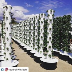 Have you ever visited a Tower Garden farm?  Photo by @cgershwinrazo  #towergarden #urbanfarming #aeroponics #californiafarm #grayavenuefarm #futureoffarming #verticalgrowing by towergardenofficial