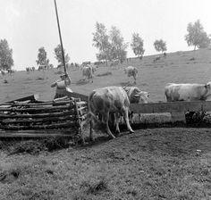 Itatás. Old Pictures, Historical Photos, Flag, Horses, Animals, Historical Pictures, Animales, Animaux, Horse