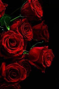 Beautiful Flowers Wallpapers, Beautiful Gif, Beautiful Roses, Red Wallpaper, Flower Wallpaper, Iphone Wallpaper, Blue Roses, Red Flowers, Love Rose Flower