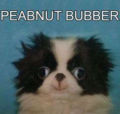 I can't stop laughing for some reason. This is something my sister would also find hysterical for some strange reason