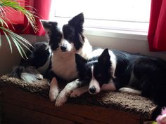 Jet and Layla - the best dogs in the World...
