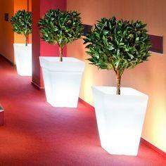 Soft Glow Illuminated Planter, $179.99