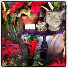 Holiday Plant Display