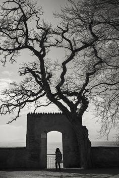 under the tree - Lindau, Germany Lindau Germany, Artwork, Landscapes, Work Of Art, Auguste Rodin Artwork, Artworks, Illustrators