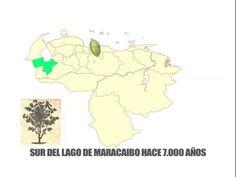 La primera planta de cacao criollo nace aquí en el Sur del Lago.