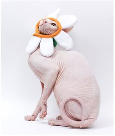 Daisy Halloween Costume Cat Hat.  Sphynx Cat Clothes Flower Hat of Fleece w safe Velcro. Custom Comfortable Daisy Hat for Cats and Dogs.