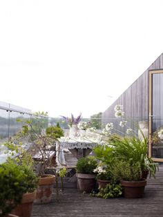 If I ever have a rooftop garden this is what it needs to look like