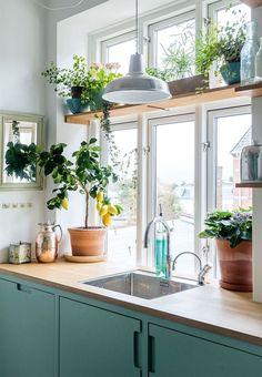 Gemütliche Landhausküche - moderner Stil. Blaue Fronten und eine Arbeitsplatte aus Holz harmonieren toll zum großen Fenster mit vielen Pflanzen. Besonderer Blickfang: eigener Zitronenbaum mit frischen Früchten für drinnen. Moderne Küchenzeile mit Spüle, toll dekoriert.