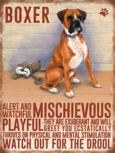 Boxer Dog Breed, Boxer Dog Puppy, Boxer Mom, Boxer And Baby, Funny Boxer Puppies, Brindle Boxer, Boxer Rescue, I Love Dogs, Puppy Love