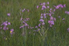 Bloemenmengsel G3 voor jaarrond natte- tot vochtige gronden. Speciaal voor oever.