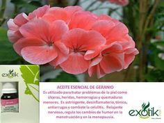 Aceite Esencial de Geranio   Geranium essential Oil