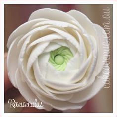Sugar Ranunculus