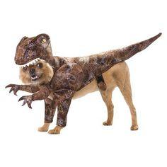 Halloween Dog Costumes | Petside