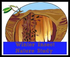 Winter Wednesday:Insects…..Really, Insects (possible #23)