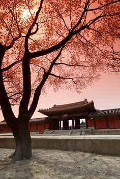 #asianwanderlust:    Spring in Korea by 369Photography.co.uk on Flickr.     -   http://vacationtravelogue.com We guarantee the best price