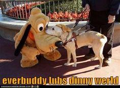 aaawwwWWWWWW! Normally this kinda thing wouldn't get me, but I have Disney Fever and Pluto and a service dog having a moment like this is soooooooooooooooooo cute!