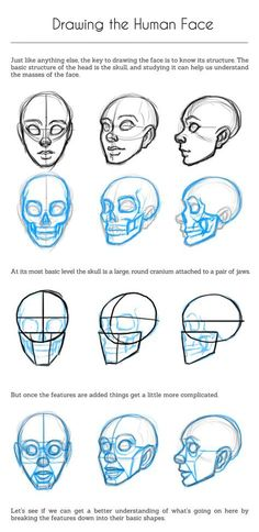 Uplifting Learn To Draw Faces Ideas. Incredible Learn To Draw Faces Ideas. Drawing Anime Hands, Drawing Heads, Drawing Faces, Human Face Drawing, Face Side View Drawing, Face Profile Drawing, Face Proportions Drawing, Drawing Techniques, Drawing Tips