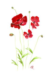 Poppies by Ian Williams. UK ... Prints available