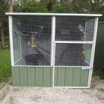 We love our Aussie Sheds Aviaries & so do our birds! We purchased our first aviary from Cheap Sheds in just two weeks before our wedding. We were pleasantly surprised when an early wedding Cheap Sheds, Drake, Outdoor Structures
