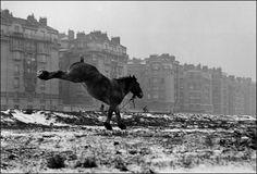 """Sabine Weiss, """"Paris Porte de Vanves, 1952"""" - Arts et scènes - Télérama.fr"""