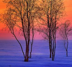 photo turned into art: winter seashore at dusk by Henri Bonell ...unnaturally gorgeously saturated sea and sky colors ... shilhouetted trees ...