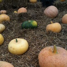 We found the pumpkin patch fall must be in the air #sweden