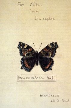"Vladimir Nabokov – Butterfly drawing, ""For Véra from the captor""l"