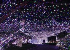 Decorating their house and yard with more than 31 miles' worth of lights, an Australian family has reclaimed a Guinness world record for most Christmas lights.