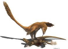 Deinonychus (Raptor Prey Restraint) - Timeline of dromaeosaurid research - Wikipedia, the free encyclopedia