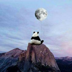 panda, moon, and sky image Cute Panda Wallpaper, Animal Wallpaper, Panda Wallpapers, Cute Wallpapers, Wallpaper Wallpapers, Image Panda, Panda Mignon, Art Tumblr, Mode Poster