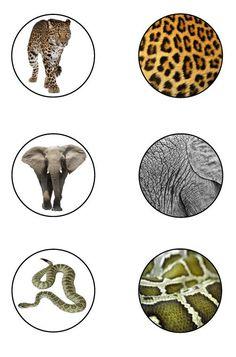 Animal Activities, Infant Activities, Preschool Activities, Activities For Autistic Children, Kids Learning, Toddler Arts And Crafts, Animal Classification, Zoo, Montessori Materials