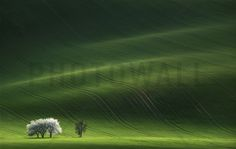 Ladies in White - Fototapety - Photowall